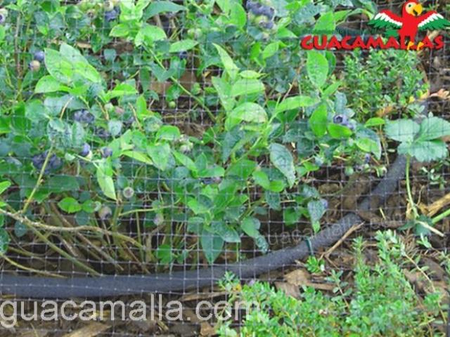 La malla de plástico GUACAMALLA brinda protección a tus cultivos
